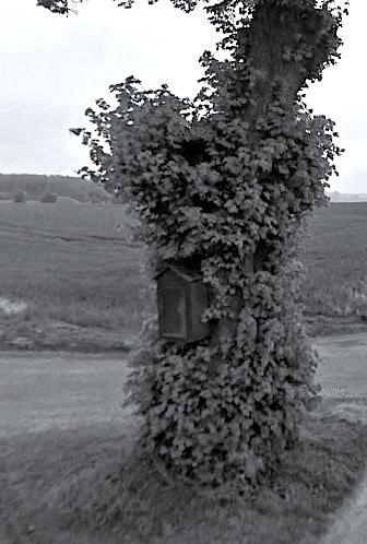 arbre-aux-morts-oeuf-en-ternois-nord-decouverte