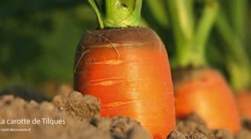 carotte-de-tilques-patrimoine-audomarois-nord-decouverte