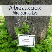 mini-arbre-aux-croix-aire-sur-la-lys