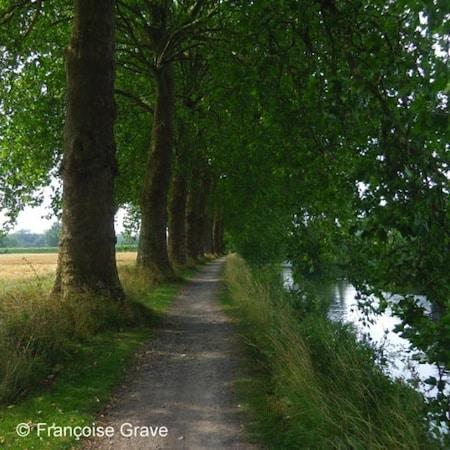 allée - platanes-canal-de-seclin-nord-decouverte