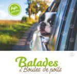 balade-et-boules-de-poils-01
