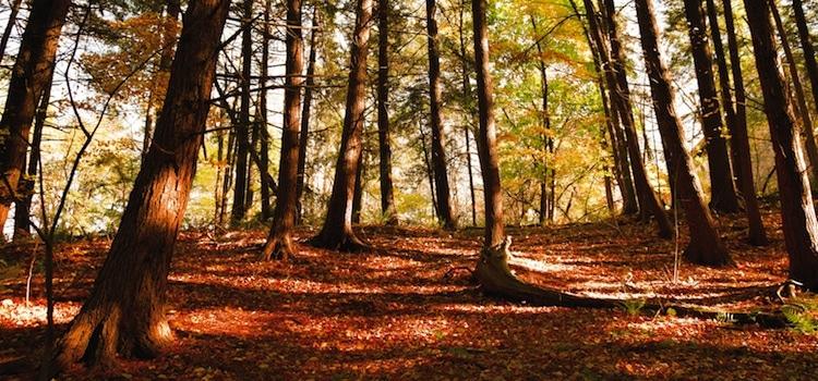 Vue des bois de la forêt de Stambruges