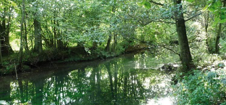 vue de bord de l'eau dans les marais de Maroeuil. Un reportage Nord Découverte