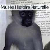 présentation du musée d'Histoire Naturelle de Lille