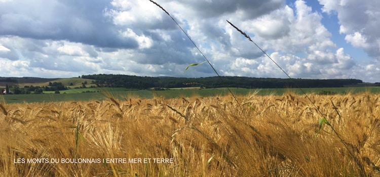 vue des monts du Boulonnais avec leurs champs de culture