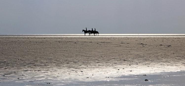chevaux marchant le long de la plage de la Huchette à Marck