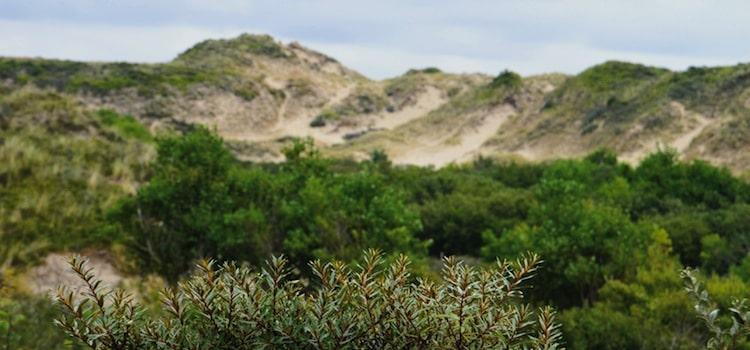 vue des dunes et des oyats des hemmes de Marck