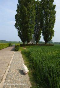 allée pavée qui mène au menhir d'Hollain, la pierre Brunehaut