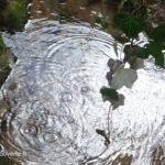 bulles et remous de la fontaine des Malades de Bours
