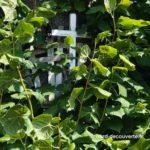 gros plan sur les petites croix accrochées à l'arbre aux Croix d'Aire sur la Lys