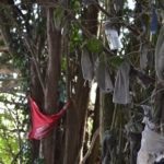 gros plan sur les loques accrochées aux branches du calvaire de Steene
