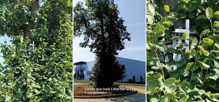 vue du nouvel aménagement de l'arbre aux croix d'Aire-sur-la-lys