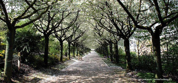 abbaye de valloires et sesallée de cerisiers du japon de