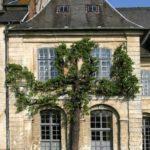 poirier ancien sur une façade de l'abbaye de Valloires