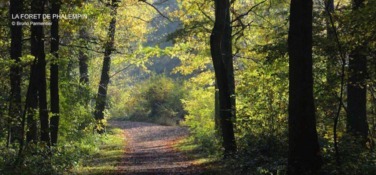 une des allées forestières au départ de l'auberge du Leu Pindu à la Neuville