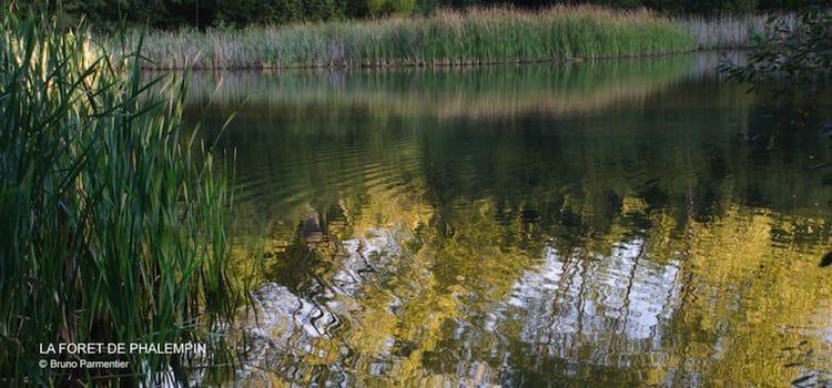 un des étangs de la forêt de Phalempin