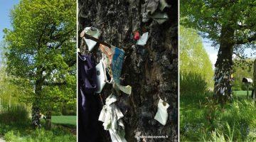vues du chêne à clous à Herchies