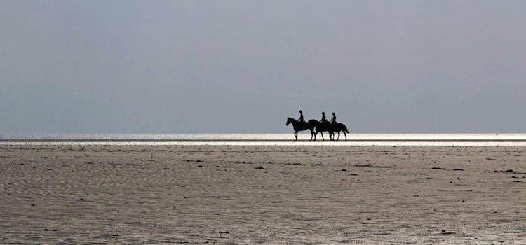 vue de trois chevaux sur la plage