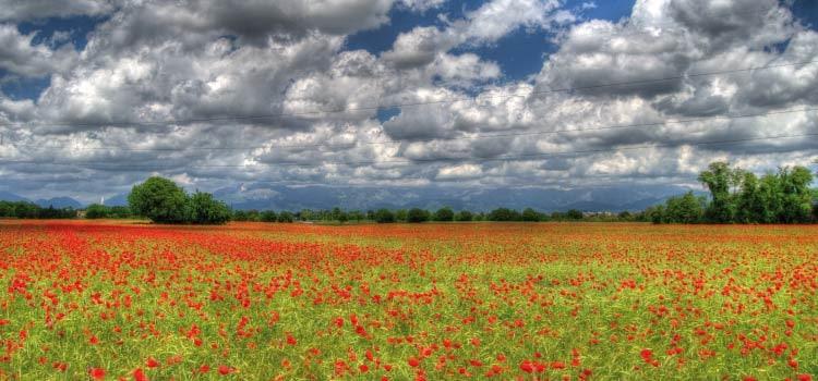 vue d'un champs de coquelicots sur le chemin des Dames