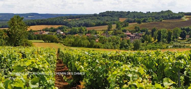 vignoble et village de Craonne sur le Chemin des Dames