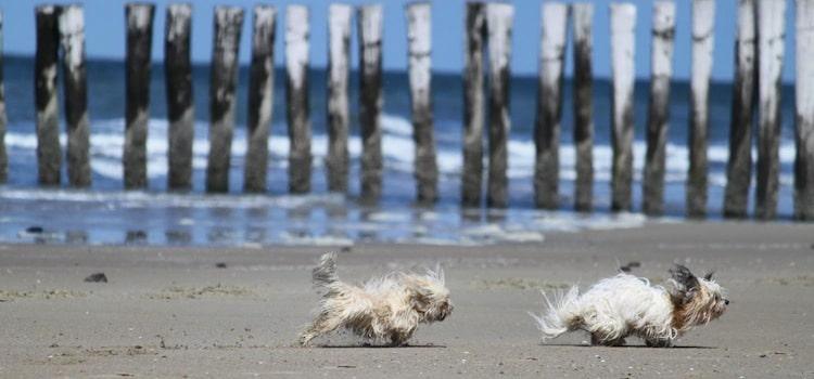 deux chiens sur une plage une des idées pour se promener avec son chien dans le Nord
