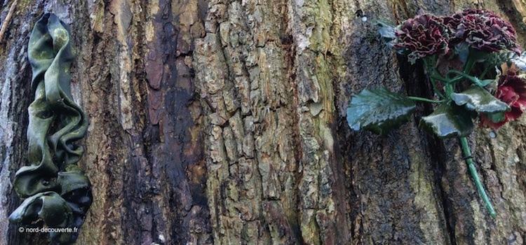 gros plan sur le tronc de l'arbre à loques Saint-Martin de Wulverdinghe