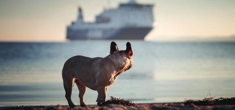 un chien qui regarde un cargo