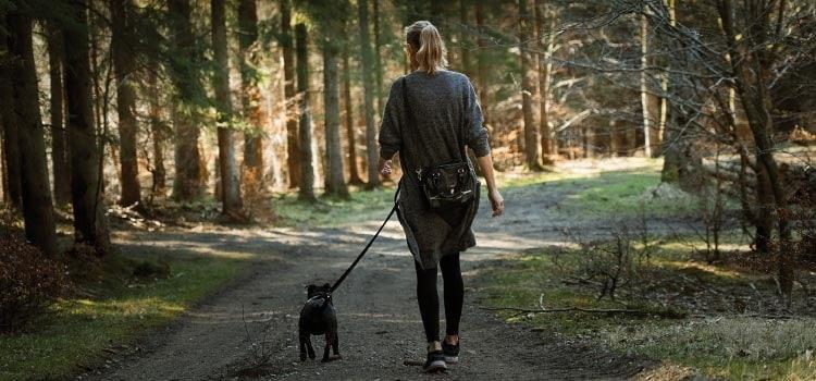 une joggeuse et son chien en forêt une idée pour se promener avec son chien dans le nord