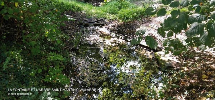 photo de la La fontaine miraculeuse Saint-Martin de Wulverdinghe qui coule dans les bois