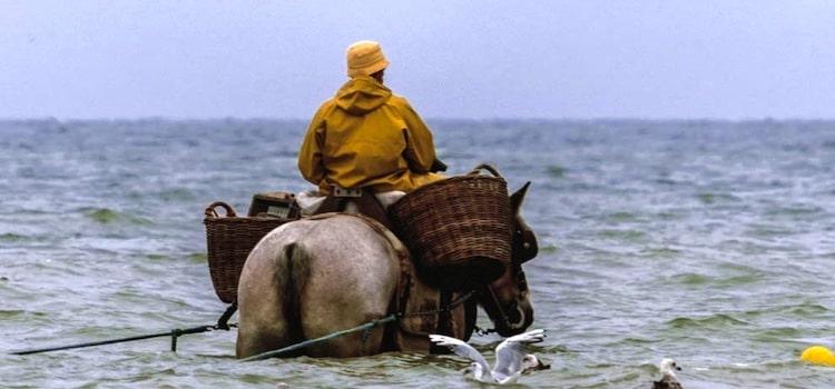 vue d'un pêcheur de crevettes à cheval entrant dans la mer