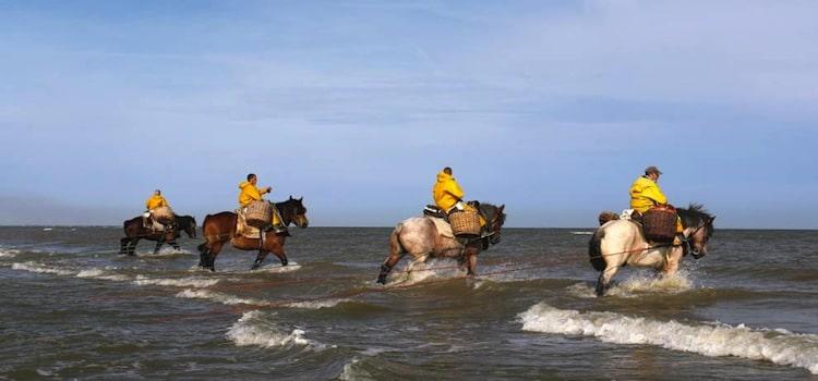 vue de quatre pêcheurs de crevettes à cheval entrant dans la mer