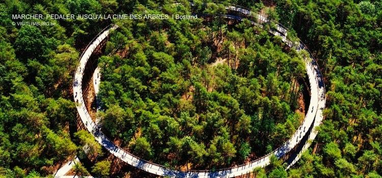 vue aérienne de la piste cyclable dans les arbres de Bosland en Belgique